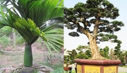 5 loại cây được người giàu chọn trồng phía trước cửa để 'thu hút tài lộc'