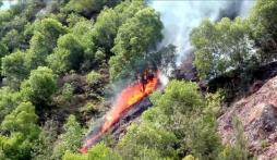 Cháy rừng tại Nghệ An nghi do đốt vàng mã cúng rằm tháng 7