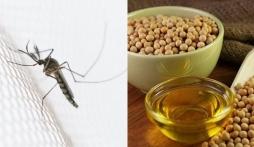 Nhà có trẻ nhỏ, ghim ngay 6 cách đuổi muỗi siêu hiệu quả mà không cần dùng đến hóa chất