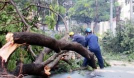 Mưa lớn, cây xanh bật gốc đè chết người ở trung tâm TP.HCM