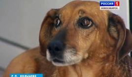 Chú chó trung thành ngồi đợi chủ 2 năm ở bệnh viện