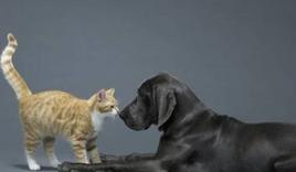 Chú chó nghĩa hiệp cứu kẻ thù không đội trời chung