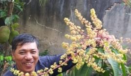 Kỳ lạ cây xoài trồng 3 tháng đã ra rất nhiều bông