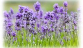 Quá trình hoa nở từ gần 10.000 ảnh đẹp khó tả