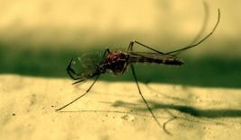 Muỗi kháng hóa chất, dịch sốt rét có nguy cơ tái bùng phát