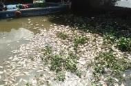 Video: Cá chết nổi trắng kênh Nhiêu Lộc- Thị Nghe