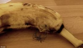 Video: Sởn da gà trước cảnh con nhện chui ra từ quả chuối