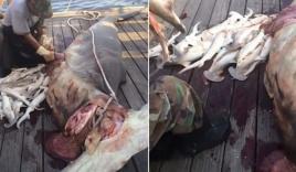Video: Cá mập mẹ mang thai 34 con bị ngư dân mổ bụng