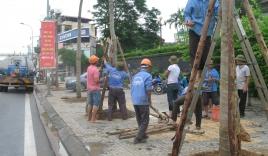Chùm ảnh: Thay thế cây xanh trên đường Nguyễn Chí Thanh