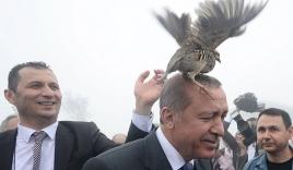 Video: Tổng thống Thổ Nhĩ Kỳ bị gà nhảy lên đầu, bám vào mặt