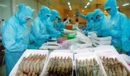 Thuế chống bán phá giá giảm, xuất khẩu tôm sang Mỹ sẽ khởi sắc