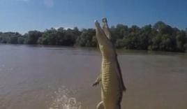 Video: Kinh ngạc cá sấu khổng lồ dựng mình lên khỏi mặt nước