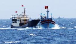 Bình Định: Xác minh vụ tàu hàng đâm tàu cá rồi bỏ chạy