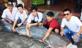 Cá tra dầu 210kg từ Campuchia về nhà hàng Việt