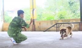 Thu trăm triệu nhờ dạy ngoại ngữ cho chó
