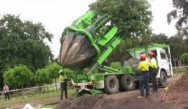 'Nể phục' cổ máy thông minh giúp di dời cây xanh