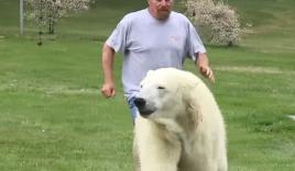 Người đàn ông liều lĩnh tắm chung cùng gấu Bắc cực