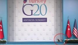 """Ba chú mèo """"cướp sân khấu"""" của các nguyên thủ quốc gia tại G20"""