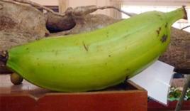 Lạ lùng giống chuối ra quả nặng 1kg có giá 20.000/quả