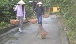 Chuyện những 'mỹ nhân' gánh chuối ra đảo nuôi Khỉ