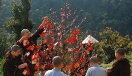 Phong tục ngày Tết: Hái lộc đầu năm và những lưu ý cần biết