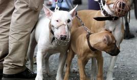 Phương tây 'quản lý' chó nơi công cộng thế nào