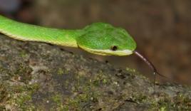 Mẹo dân gian đuổi rắn ra khỏi nhà đơn giản