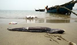 Cá chết trôi dạt vào bờ, biển Đà Nẵng có tắm được không?