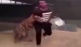 Video: Hổ điên cuồng lao vào tấn công chủ nhân