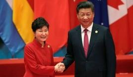 Tập Cận Bình 'nổi nóng' với Park Geun-hye vì THAAD