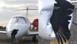 Đại bàng dính chặt vào máy bay sau cú đâm 'định mệnh'