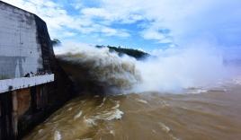 Thủy điện Hòa Bình xả lũ: Hàng trăm tấn cá lồng chết hàng loạt