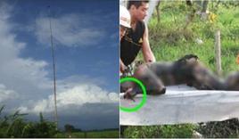 Bình Thuận: Người đàn ông bị sét đánh cháy đen không thể nhận dạng