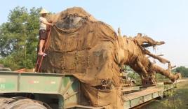 Tỉa cành, gọt bầu đất đưa 3 cây 'quái thú' rời Huế sau nửa tháng giam giữ