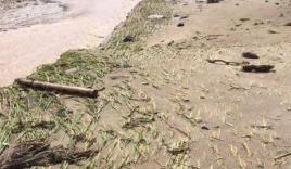 Con tử vong, cha mất tích sau lũ quét ở Hà Giang