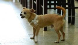 Nghẹn ngào chú chó buộc tang trắng, túc trực bên linh cữu cố nghệ sĩ Lê Bình
