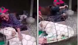 Cái kết đẹp cho cụ bà vùng cao sau khi khóc cạn nước mắt vì phải bán chú chó thân thiết