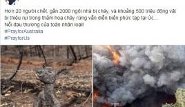 MC Phan Anh cùng dàn sao Việt đau xót cho thảm họa cháy rừng tại Australia