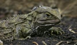 12 sinh vật sống thọ nhất Trái đất, có loài hơn 1.500 tuổi vẫn chưa chịu 'chuyển kiếp'