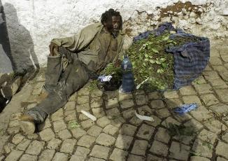 Cận cảnh loài cây giết người ở lục địa đen