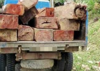 Bắt lâm tặc lái xe tải đâm chết kiểm lâm