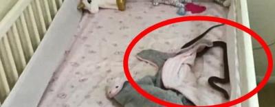 Đặt con gái 4 tháng tuổi nằm ngủ trong cũi, 1 tiếng sau bà mẹ giật mình phát hiện cảnh tượng \
