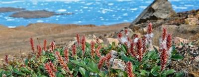 Hiện tượng bất ngờ đang xảy ra với thực vật ở Bắc Cực cho thấy ảnh hưởng ngày càng lớn của biến đổi khí hậu