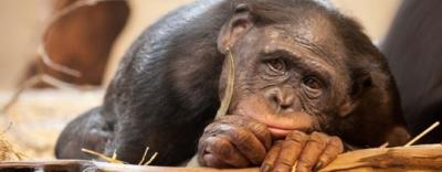 Quấy rối tình dục một con khỉ, người phụ nữ lãnh 3 năm tù