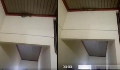 Nguyên 1 ổ rắn làm tổ trên mái nhà khiến chủ nhà hãi hùng bỏ chạy