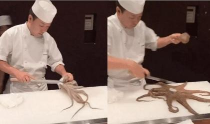 Đầu bếp Nhật múa dao làm món bạch tuộc sống chỉ trong chớp mắt khiến thực khách trầm trồ