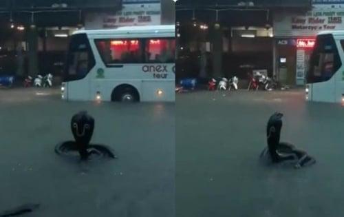 Clip: Hãi hùng người đàn ông liều mạng xuống giếng cứu rắn hổ mang cực độc