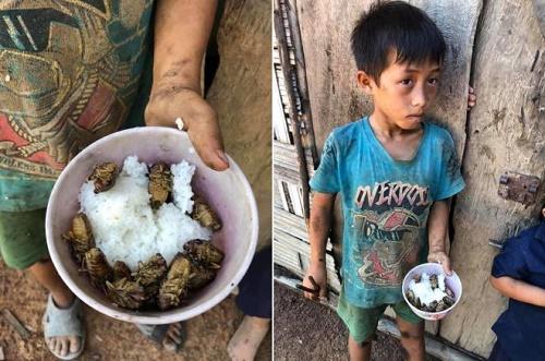 Vụ 4 anh em ăn cơm nguội với ve sầu ở Đắk Lắk: PCT huyện nói do sở thích 1