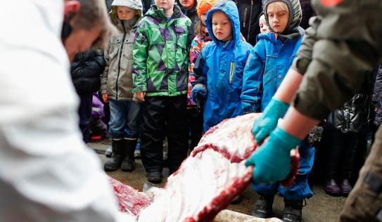 Sở thú giết hươu, xẻ thịt làm mồi cho sư tử