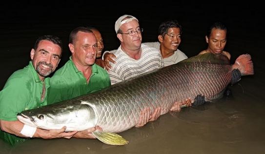 Cận cảnh 'thủy quái' ăn thịt hung dữ nhất vùng Amazon